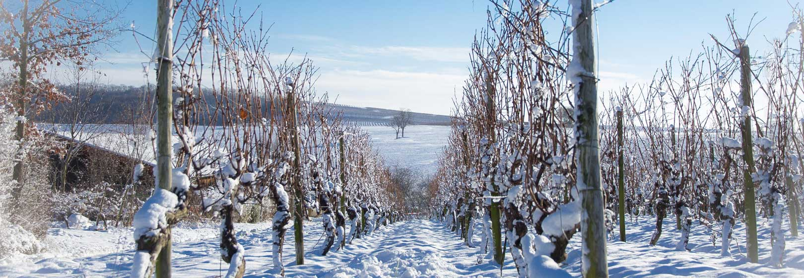 Gau-Bischofsheim im Winter
