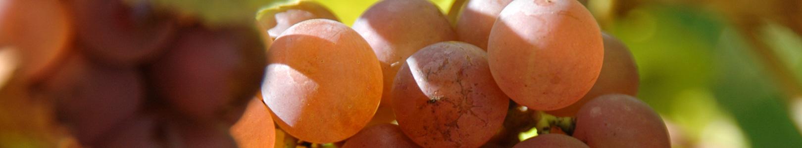 Gastliches Bischem - Gastronomie und Wein